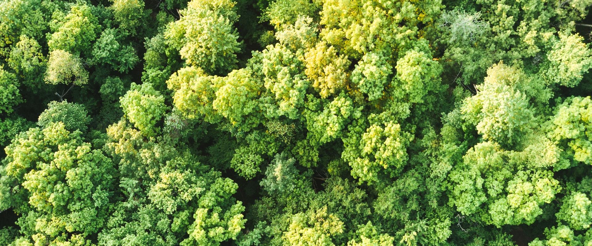 Baumkronen Luftbild