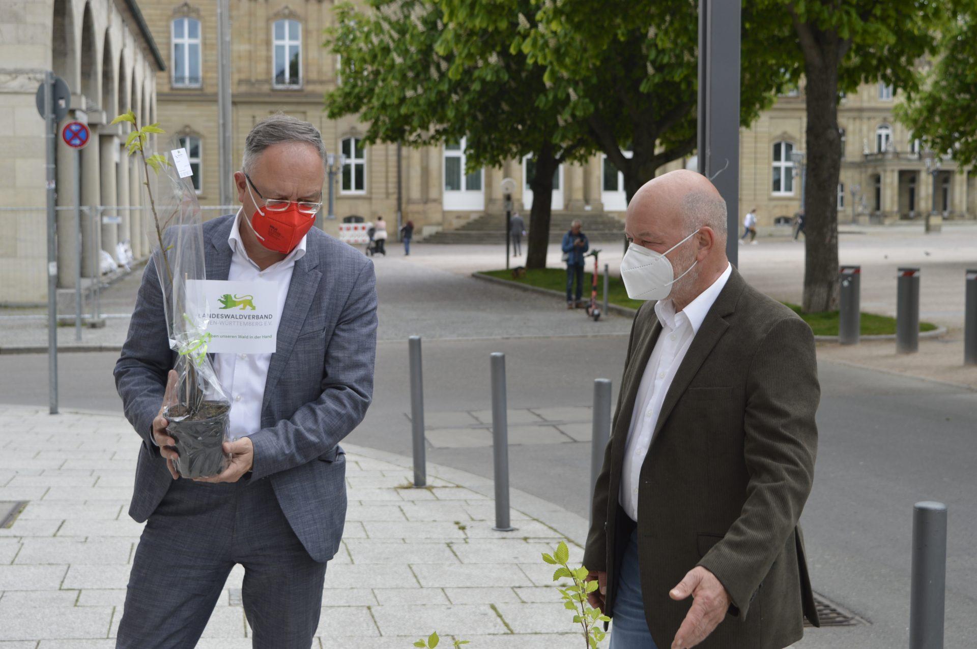 LWV Setzling Stoch SPD