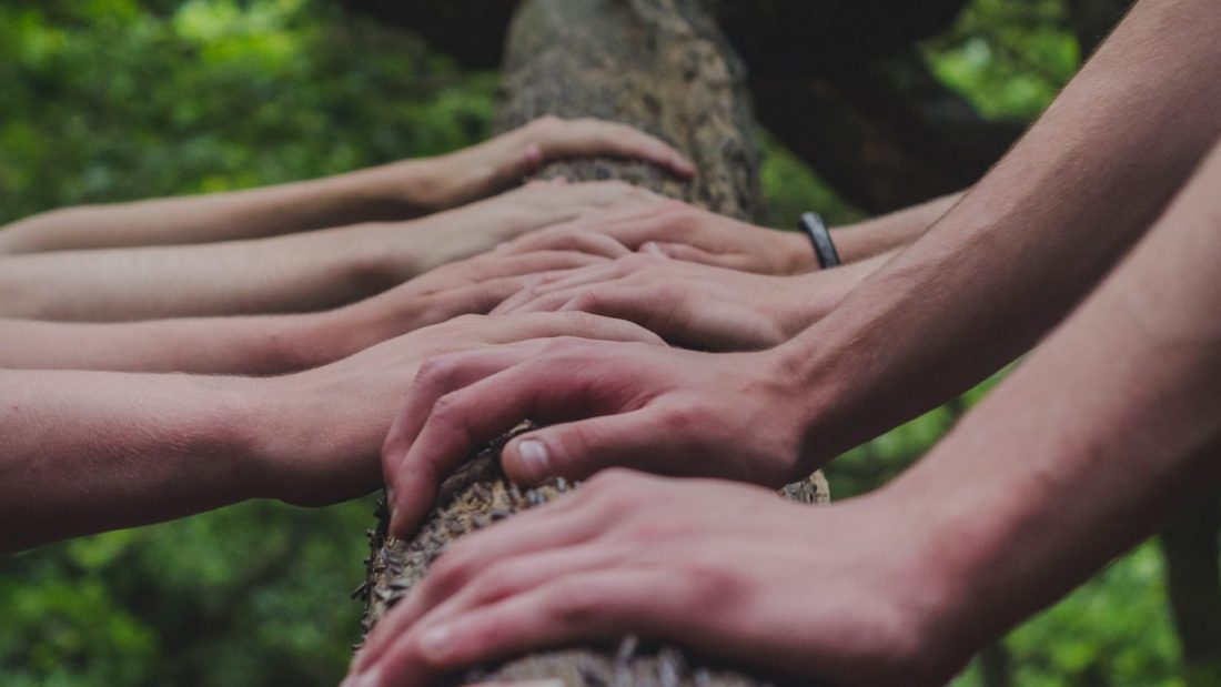 Hilfe für den Wald